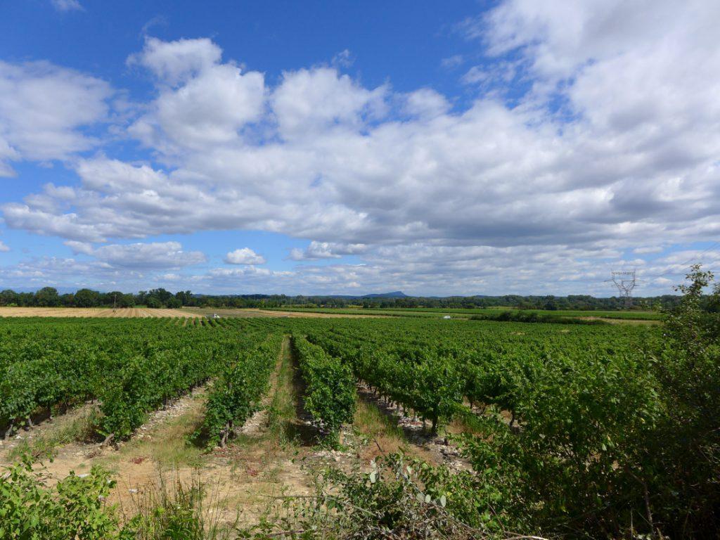 Weinplantagen gr700 regordaneweg
