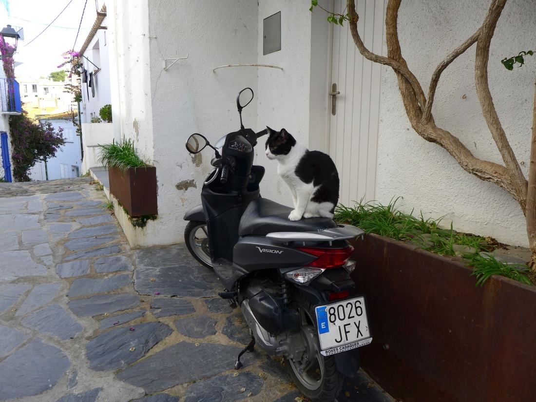 Auch Katzen mögen Motorräder