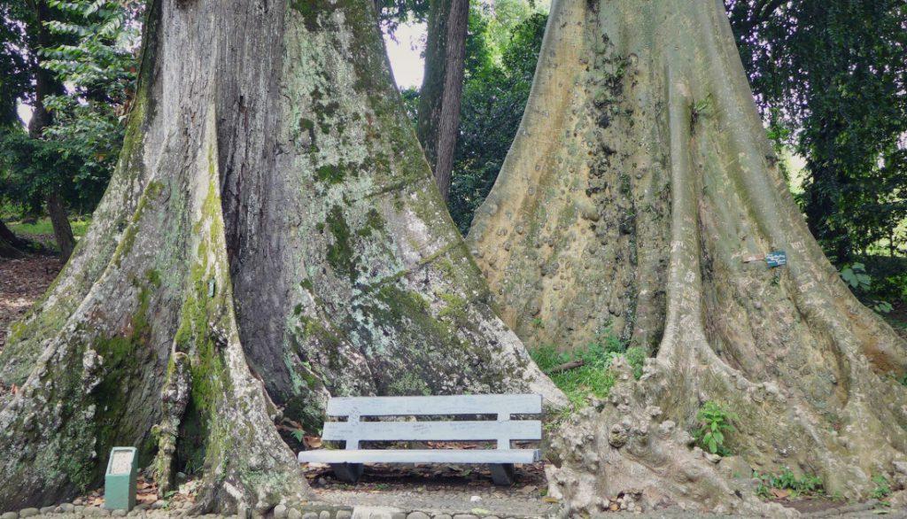 Indonesien Zweitheimat Bäume