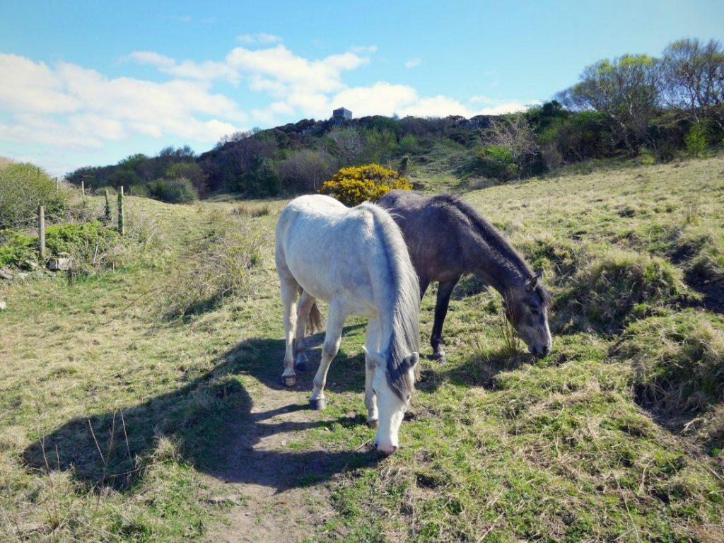 Clifden John D'arcy Monument Pferde